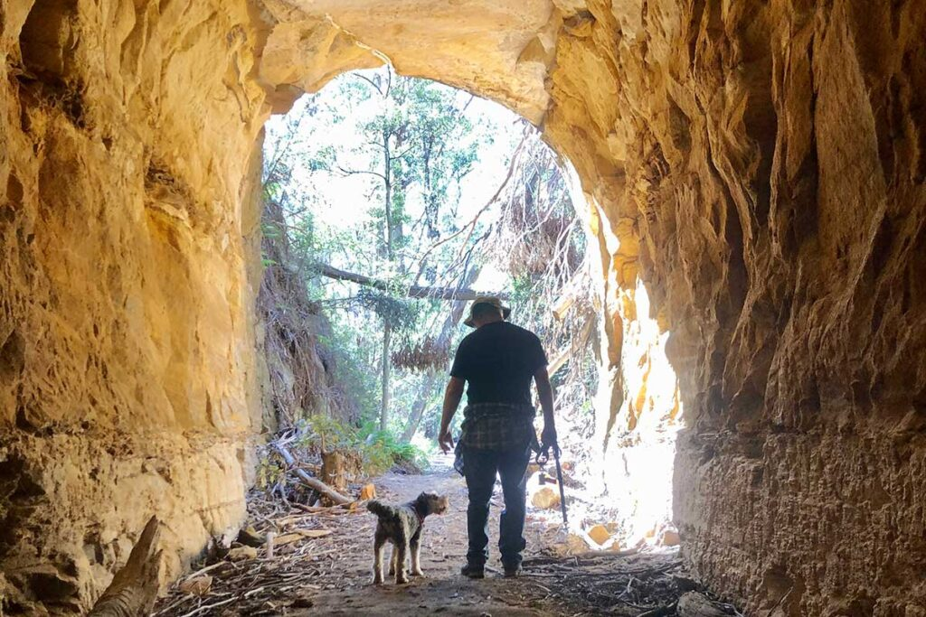 Pet Friendly walks in the Southern Highlands